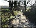 SX1785 : Lane at Trevivian by Derek Harper