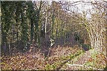 TQ2996 : Footpath near Pond in Lakeside, Enfield by Christine Matthews
