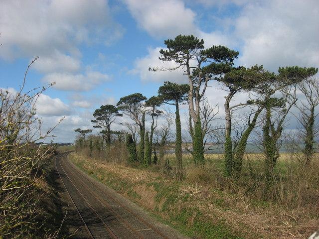 Scots Pine and Railway at Knocknagin