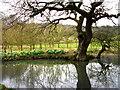 SU8518 : Pond near Bepton Church by Chris Gunns