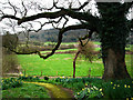 SU8518 : View from St Mary's churchyard, Bepton by Chris Gunns