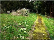 SU8518 : St Mary's churchyard, Bepton by Chris Gunns