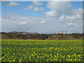 SJ5682 : View from Bridgewater Canal Towpath at Keckwick by Sue Adair