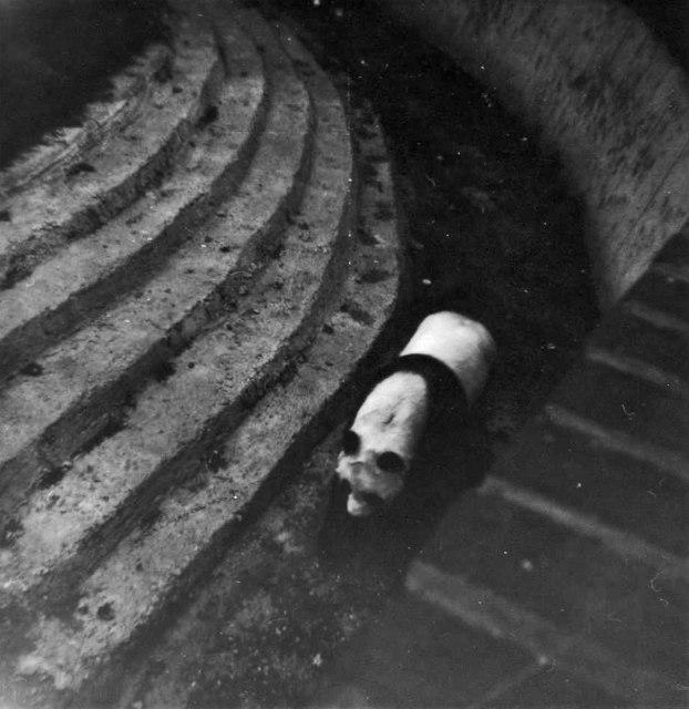 Chi Chi, Giant Panda, London Zoo, Camden, taken 1967