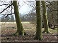 TL9079 : Beech trunks by Jonathan Billinger