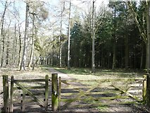 SO6210 : Entrance to Saintlow Inclosure by Graham Horn
