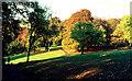 NS5859 : Linn Park autumn 1972 by Tom Caldwell