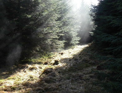 NS2270 : Leapmoor Forest, firebreak by william craig