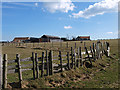 NZ9206 : Fence near Manor Farm, Normanby by Stephen McCulloch