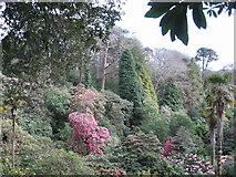 SW7627 : Trebah gardens by Dr Duncan Pepper