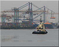 J3576 : Tug 'Norton Cross' in the Victoria Channel, Belfast by Rossographer
