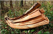 J4772 : Split tree branch, Killynether Wood by Albert Bridge