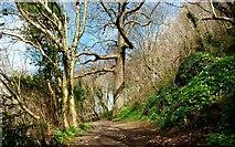 J4772 : Path, Killynether Wood (3) by Albert Bridge