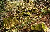 J4772 : Drystone wall, Killynether Wood (3) by Albert Bridge