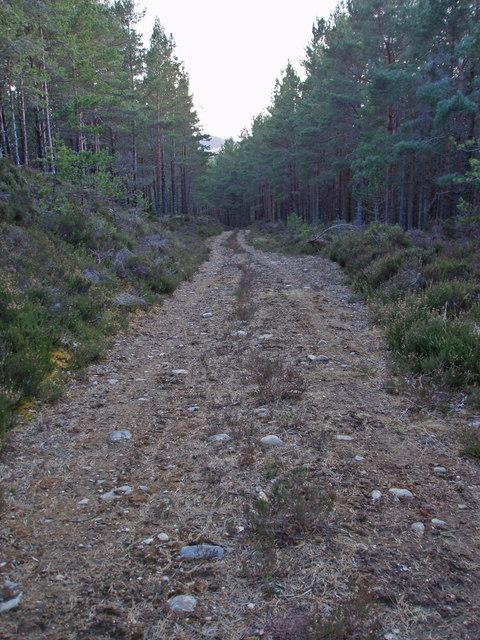 Track, Duthil Plantation