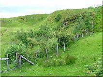 NG4162 : Small Plantation at Balnaknock by Dave Fergusson