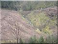 SH7910 : Mountain stream leading to Nant  Cwmgerwyn by liz dawson