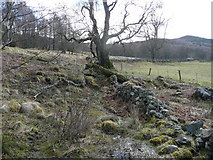 NN8759 : Dilapidated drystane dyke by Russel Wills