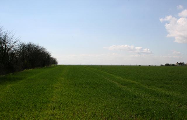 Field on Leewick Farm