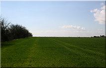 TM1114 : Field on Leewick Farm by terry joyce