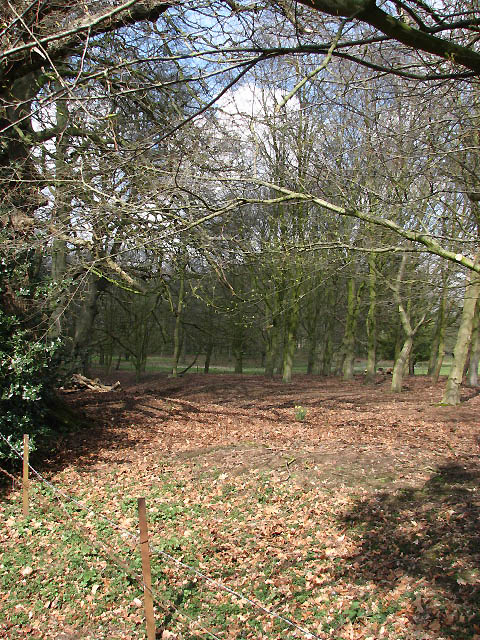 Woodland on the grounds of Booton estate
