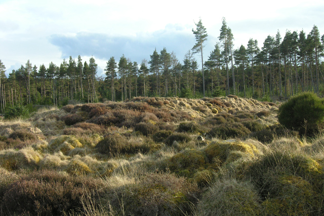 """Long Cairn"", Millbuie Forest"