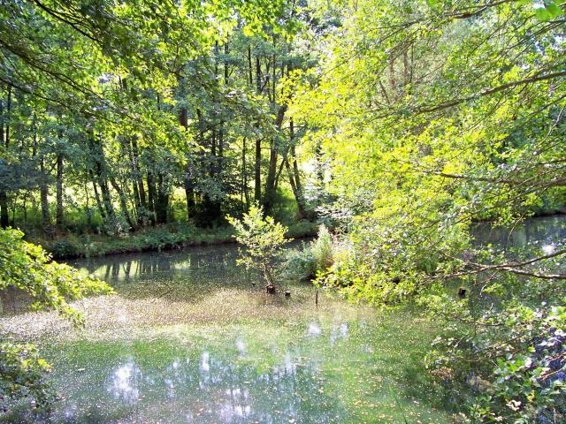 Steanbridge Mill Pond in Slad