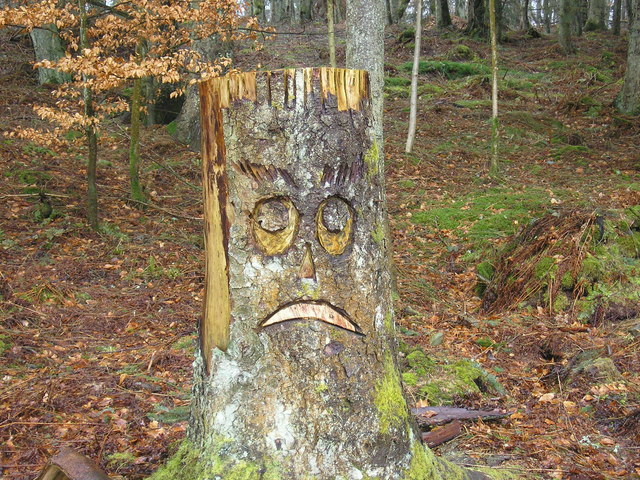 Sad Face in Wooplaw Woodland