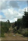 NH6762 : Millbuie Forest track by George Brown