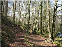 SH7518 : Torrent Walk by Peter Humphreys