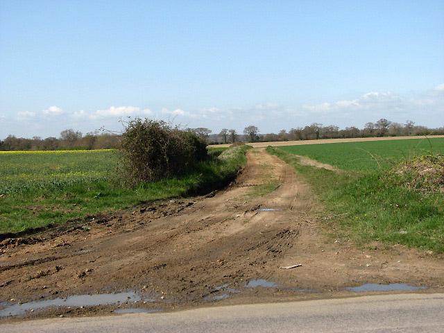 Cawston Lane