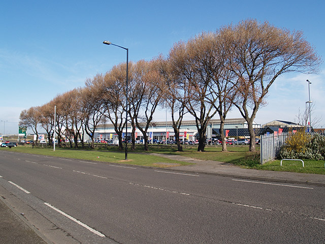 Line of trees, South Bank Road