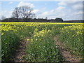SO6794 : Oilseed Rape in bloom by Row17