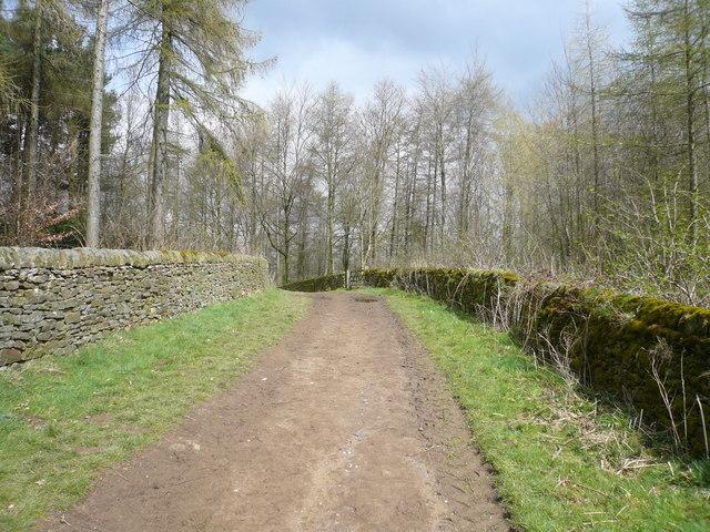 Chatsworth Park - Path through New Piece Wood