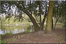 TQ2996 : Footpath round the pond, Lakeside, Enfield by Christine Matthews