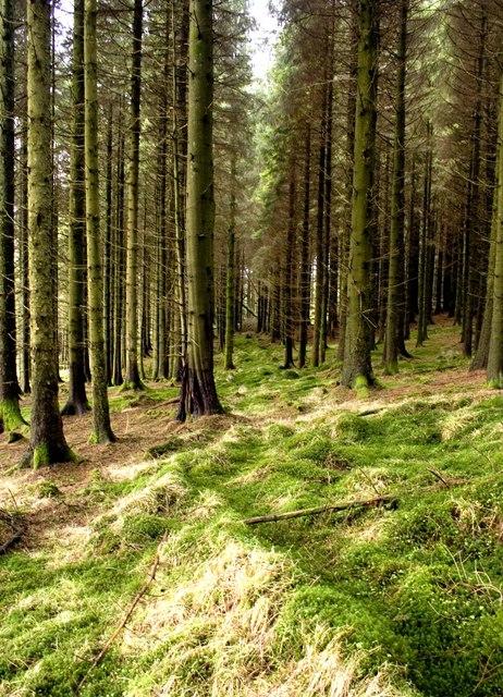 Craigshinnie Forest Near Glenlee