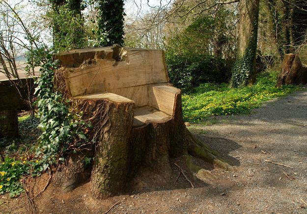 Tree seat, Killynether Wood