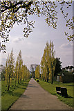 TQ3095 : Avenue of Poplar Trees, Oakwood Park, London N14 by Christine Matthews