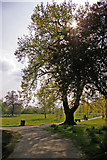 TQ3095 : Large Oak Tree, Oakwood Park, London N14 by Christine Matthews