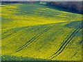 SU3663 : Oilseed rape, near Upper Green by Brian Robert Marshall