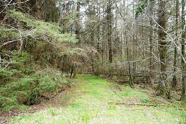 In Glencar woodland