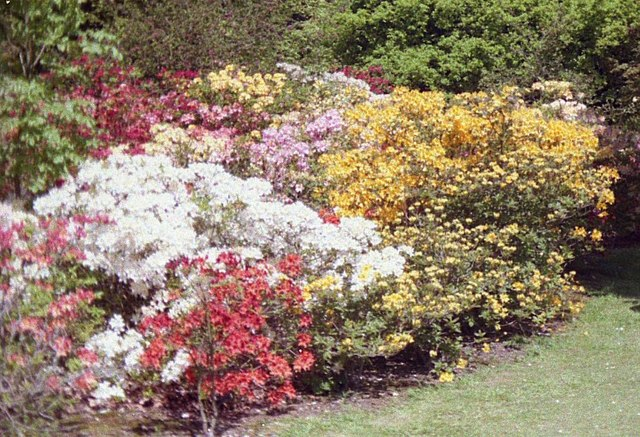 Exbury Gardens Colour by John Firth