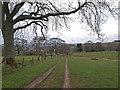 NT9502 : Track, Holystone by wfmillar
