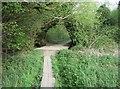 SU6552 : Footpath walkway across wetlands by Sandy B
