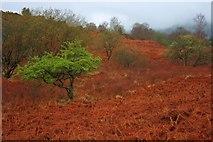 SD3683 : Hawthorn, Black Beck by Mick Garratt