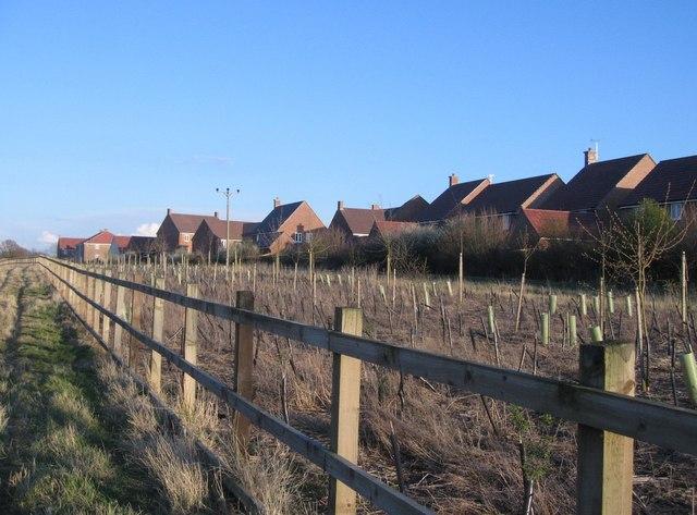Rear view of housing in Hewitt Road