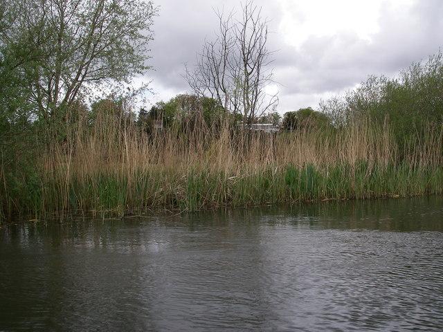 Avon river bank