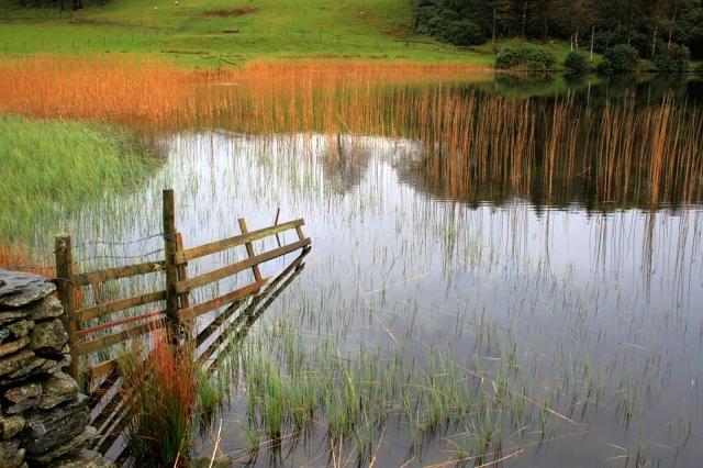 Fence, Bigland Tarn