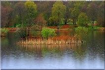 SD3683 : Island in the Rain by Mick Garratt