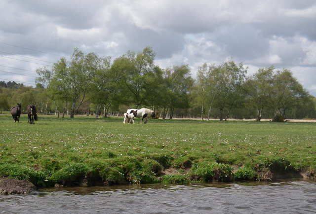 Horses on Coward's Marsh